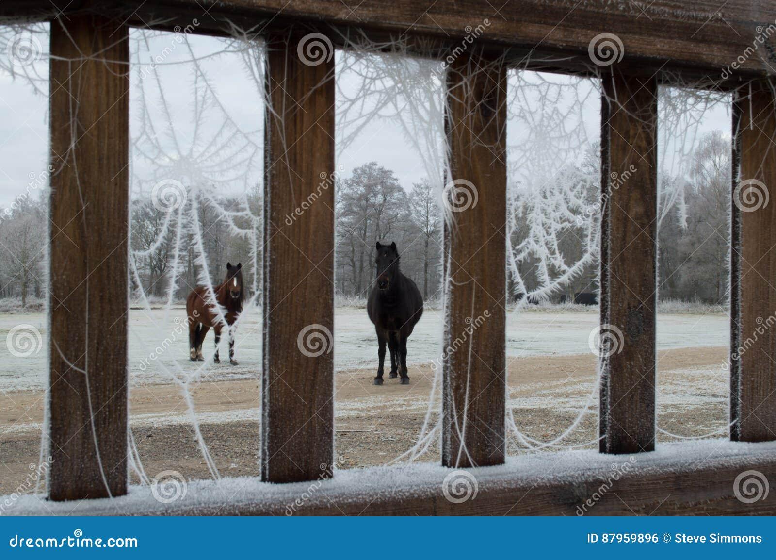 Ponnyer till och med jästdörren