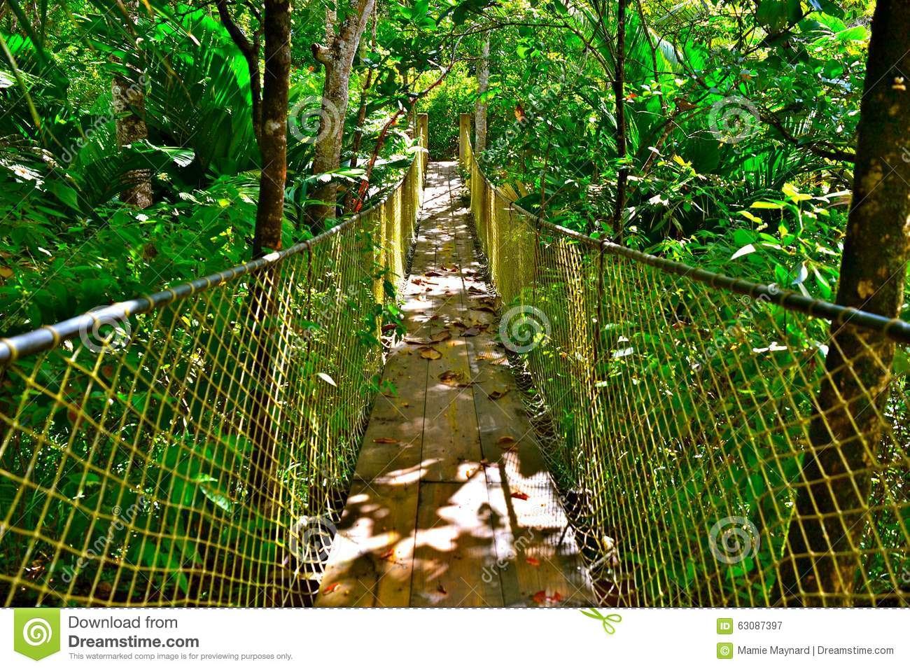 Download Pont de jungle image stock. Image du feuillage, hausse - 63087397