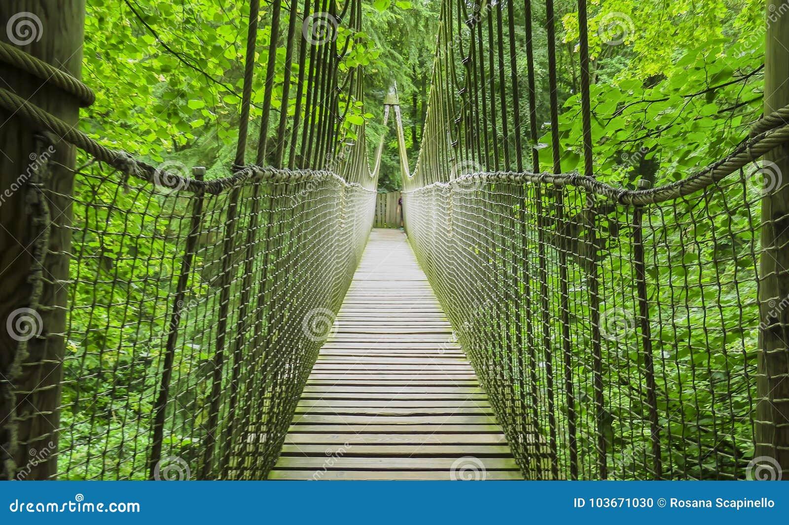 Pont en bois de cabane dans un arbre, en bois et de corde d Alnwick, jardin d Alnwick, dans le comté anglais du Northumberland