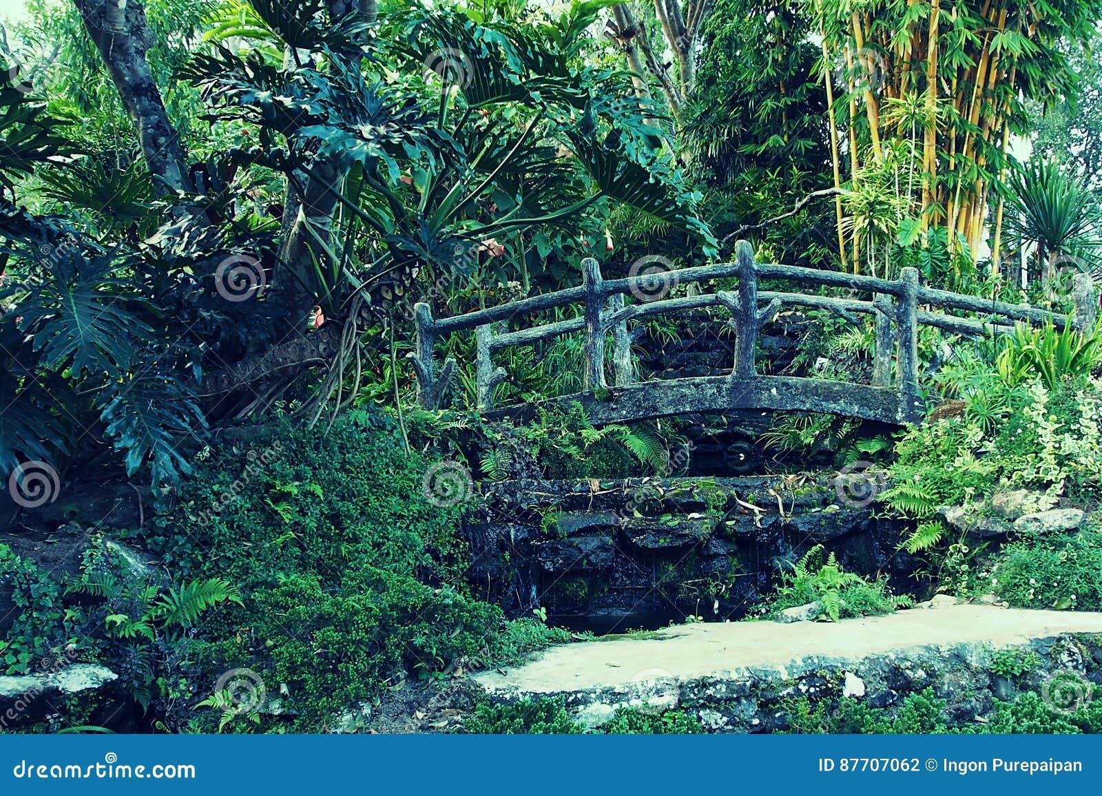 Pont en bois de vigne verte dans le jardin