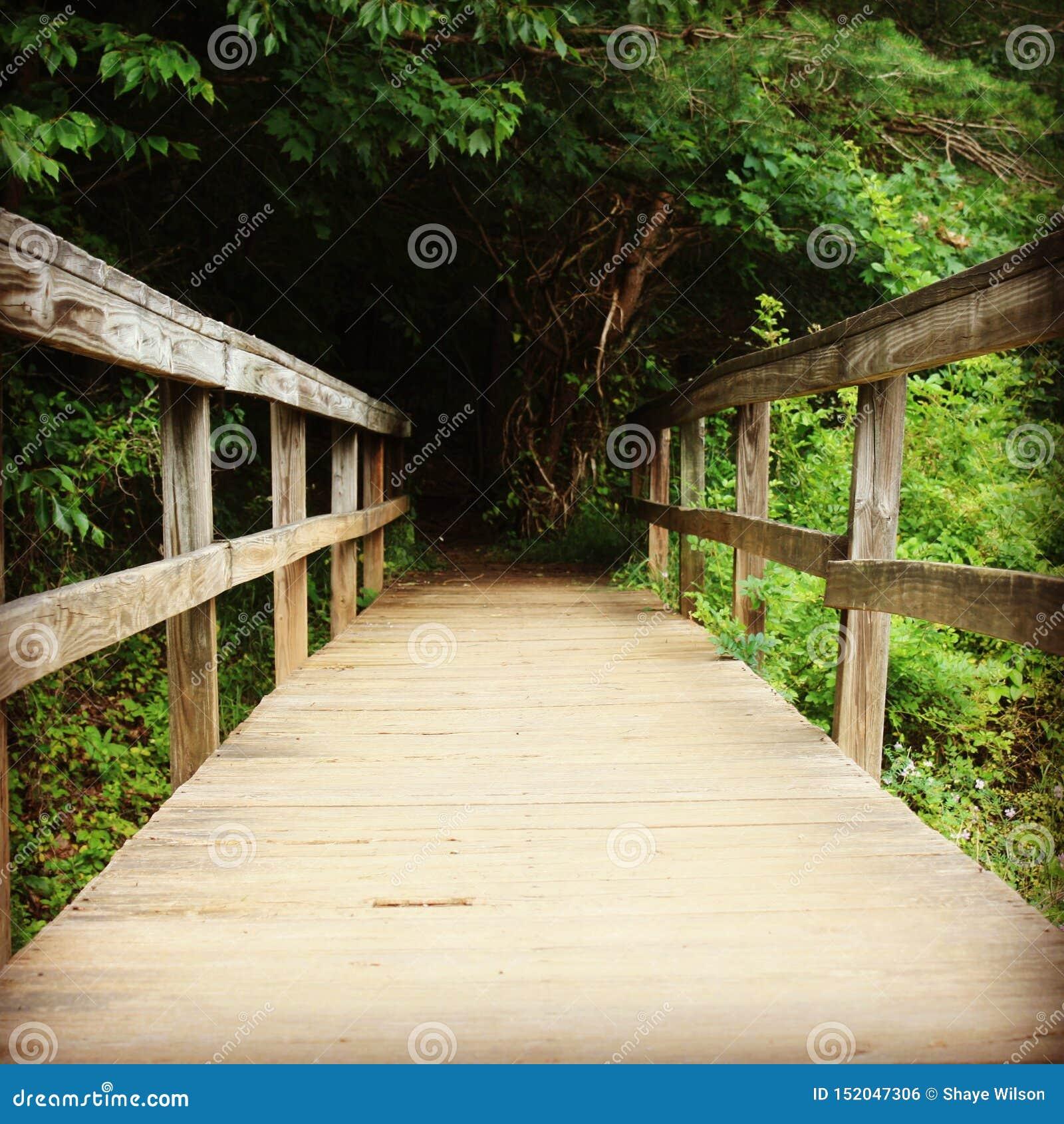 Pont en bois menant dans la forêt