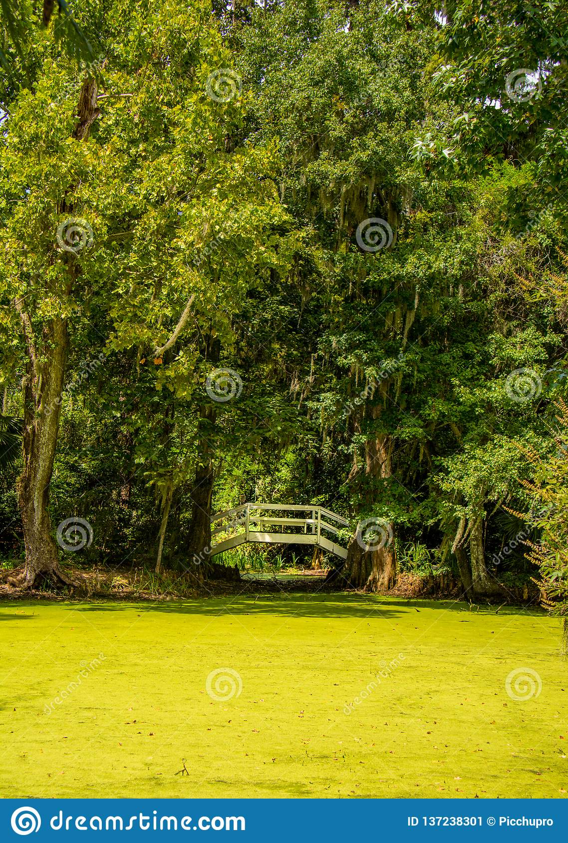 Ponte arqueada do jardim