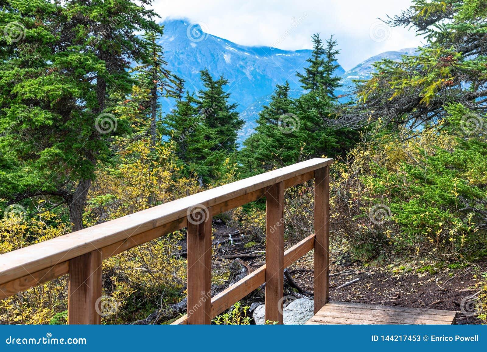 Ponte de madeira e opiniões impressionantes da paisagem de árvores e de montanhas alpinas