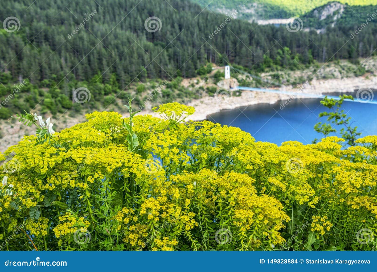 Ponte de suspens?o de Suhovo sobre o reservat?rio de Kardzhali