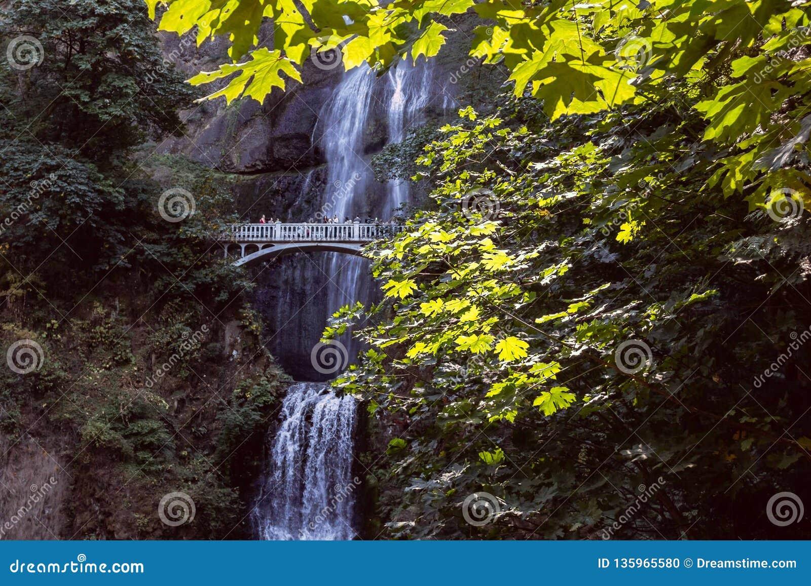 Ponte della cascata attraverso fogliame