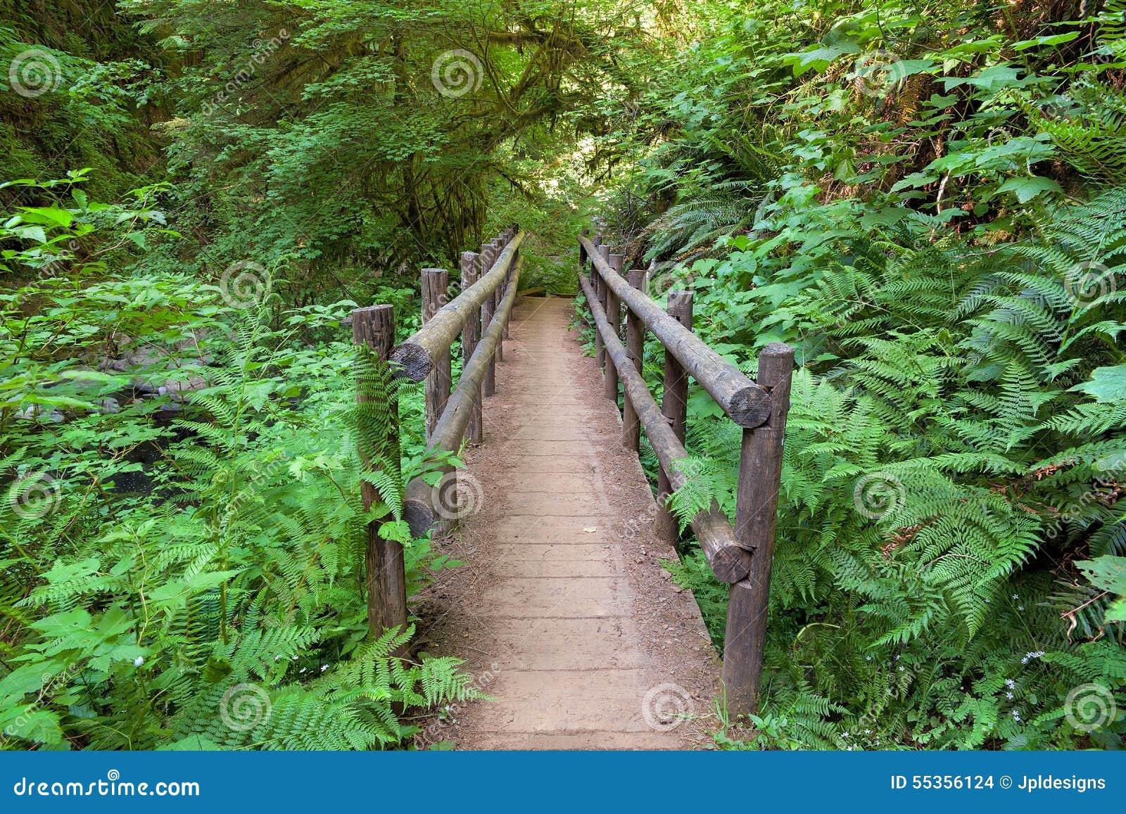 Ponte di legno nella traccia di escursione dolce di cadute dell insenatura