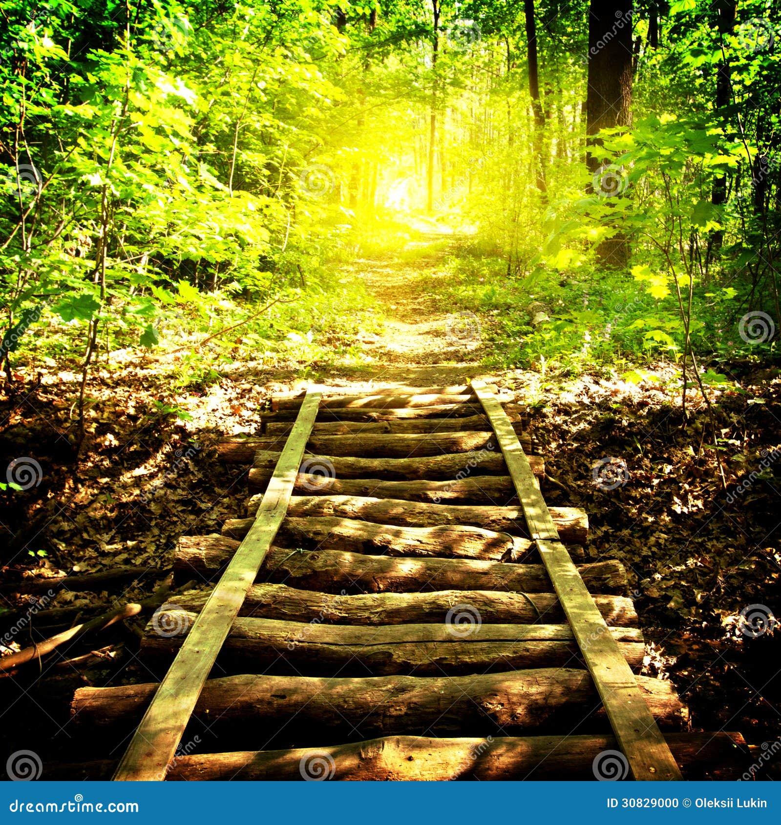 Ponte e sentiero per pedoni in foresta