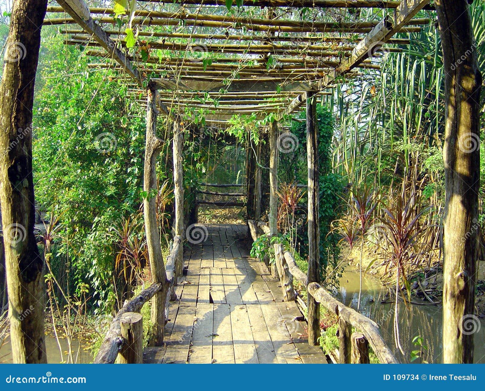 Ponte na selva tailandesa