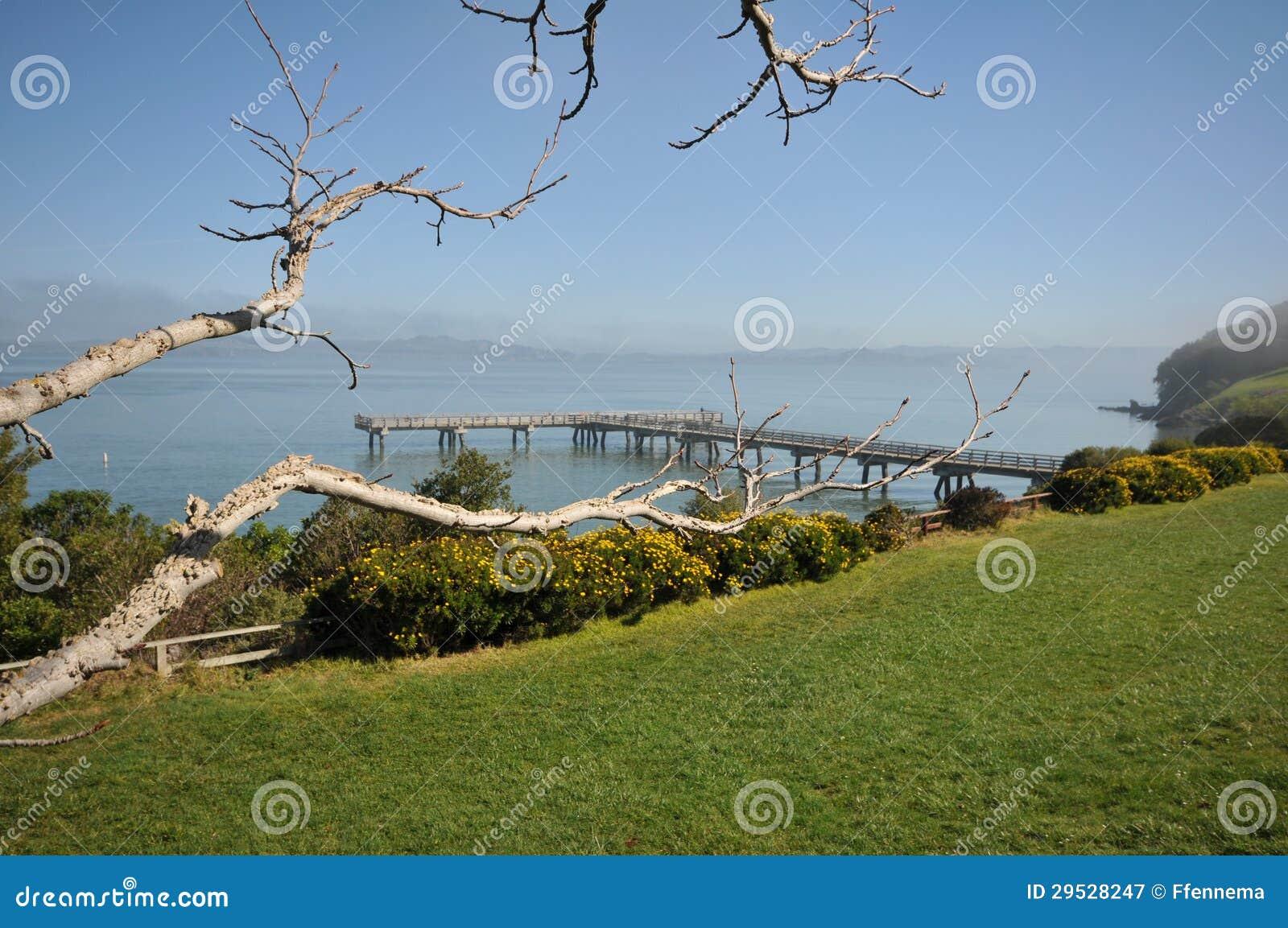 Ponto de ramos do carvalho a um cais no oceano