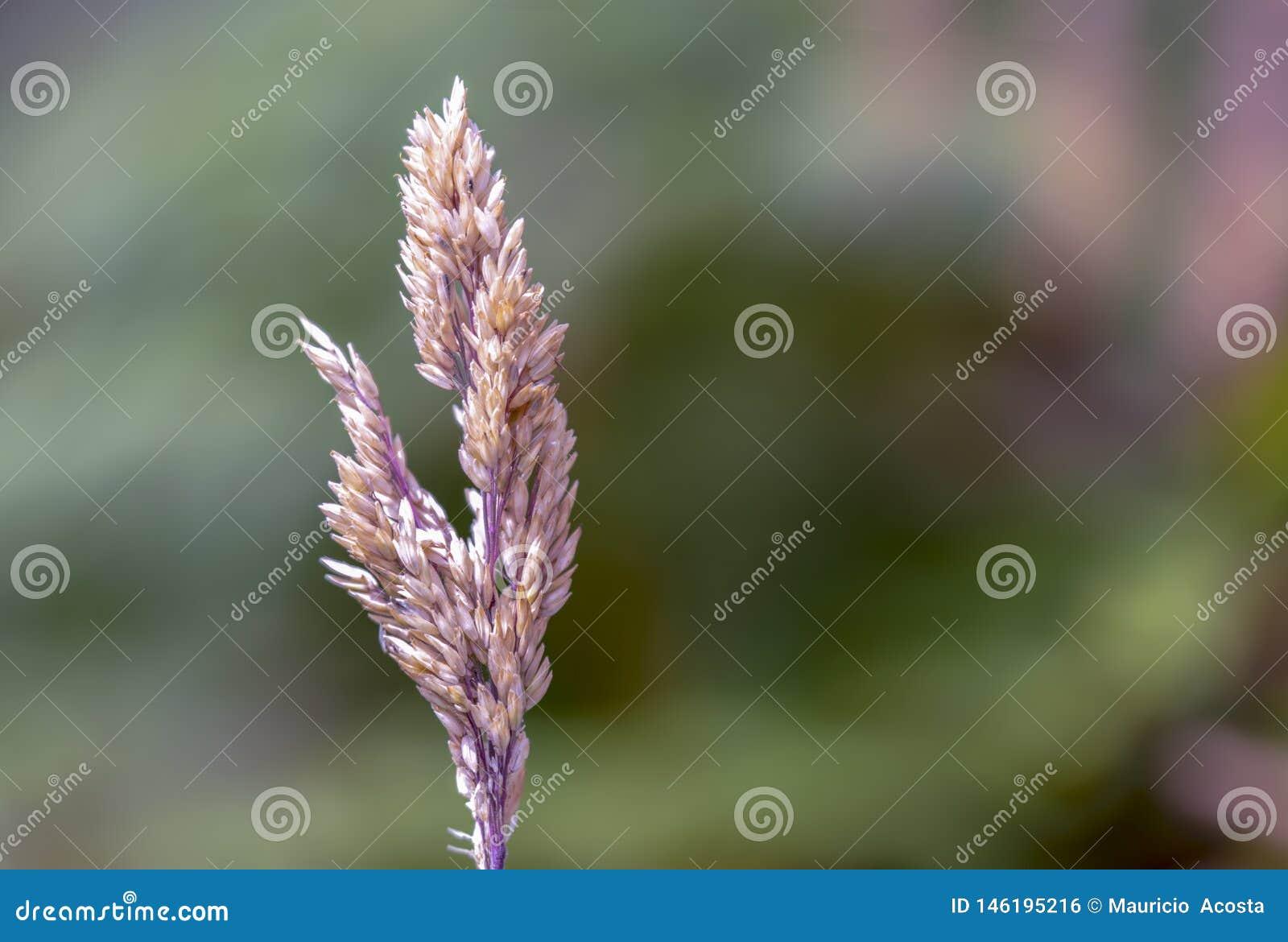 Ponto desenvolvido completo da grama