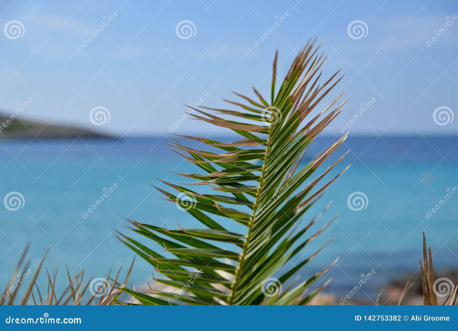 Pontos em uma planta em um dia de verões com o oceano azul claro atrás