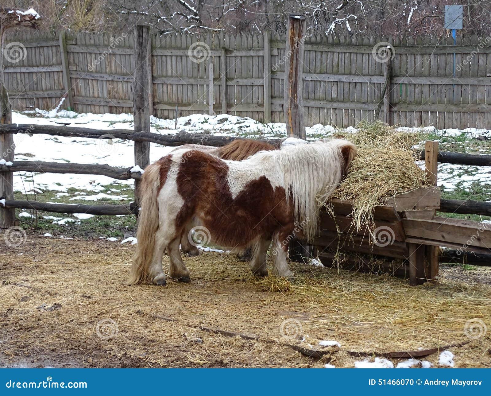 Pony, das Heu isst