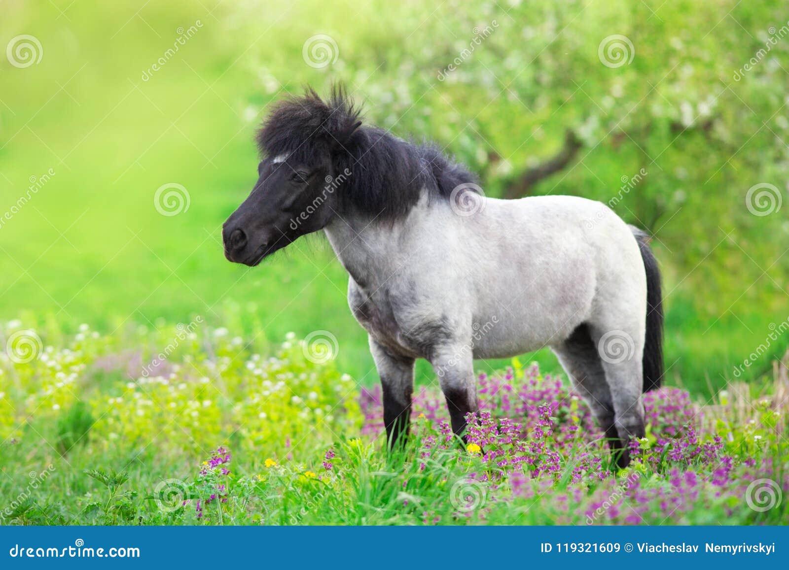 Pony in flowers meadow