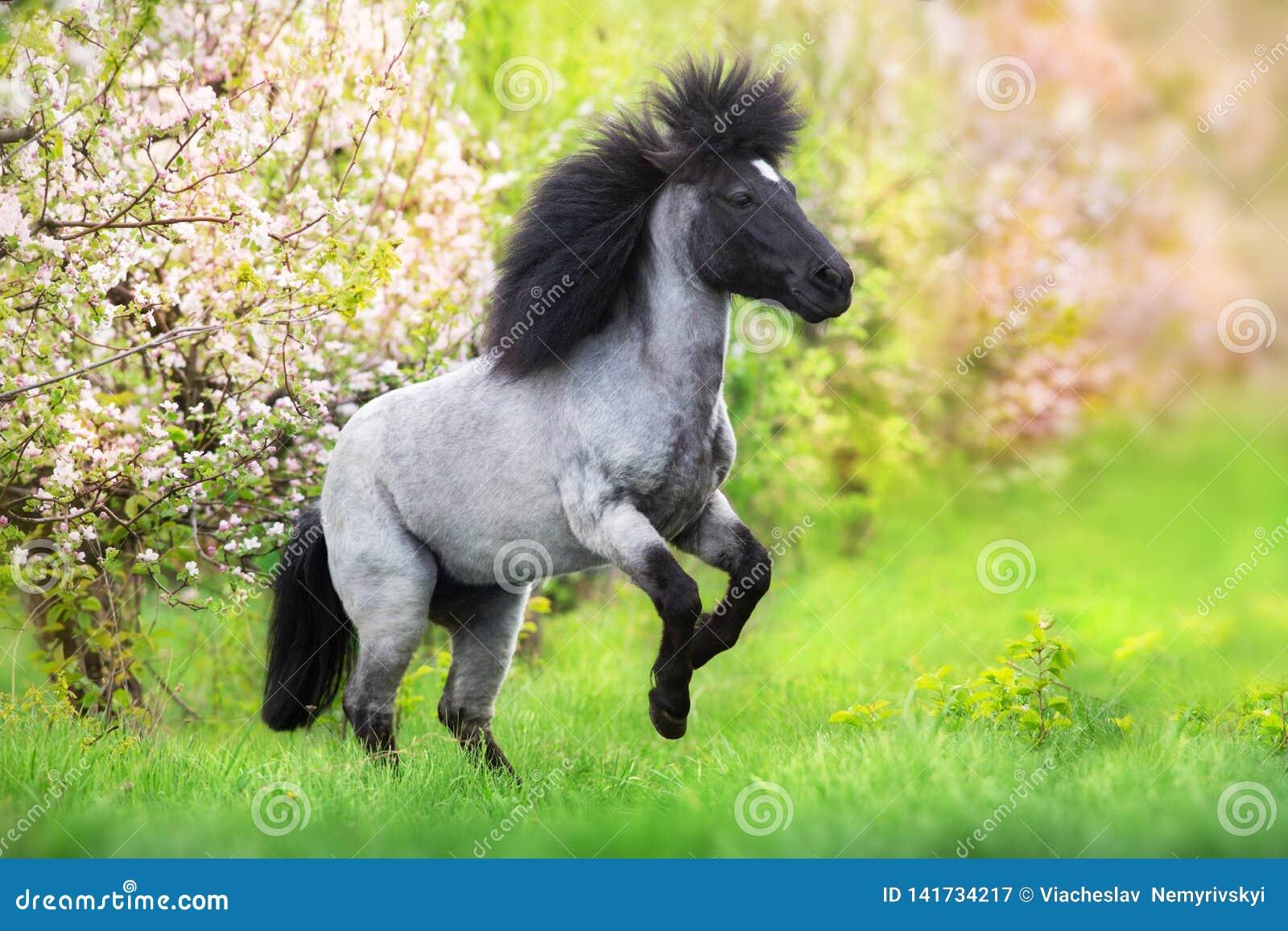 Pony rearing up