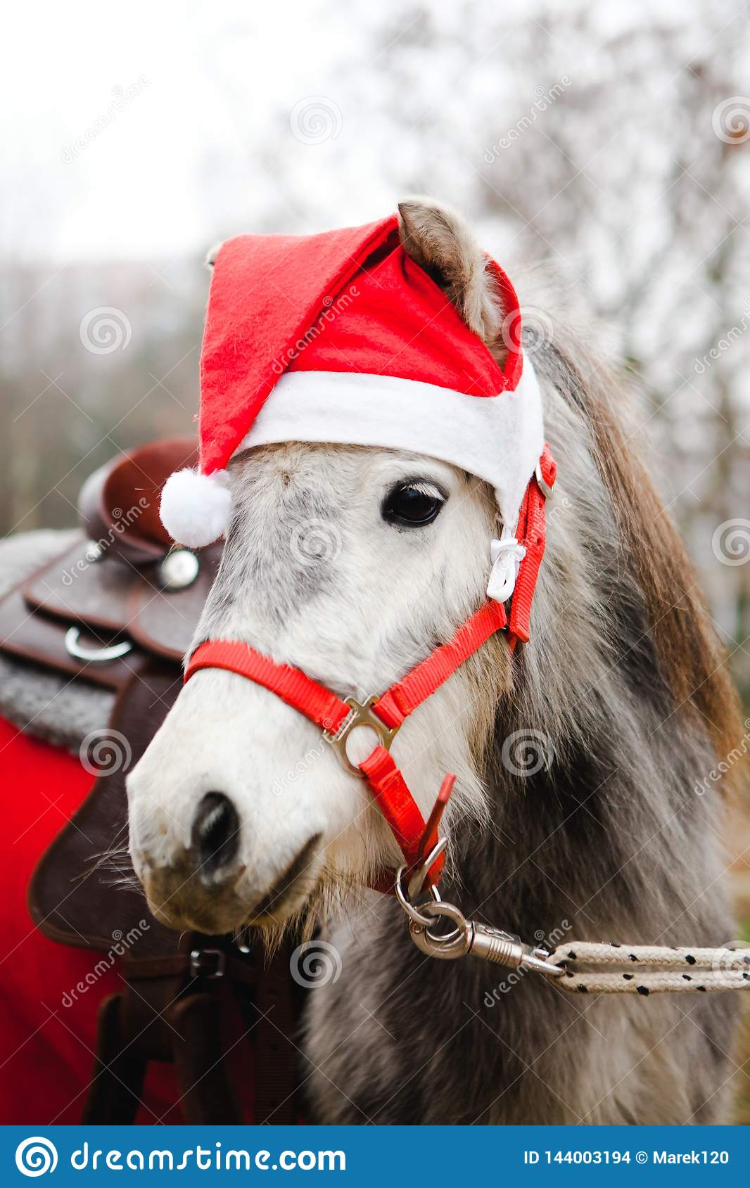 Pony In Santa Claus S Red Cup Christmas Horse Stock Photo Image Of Closeup Wearing 144003194