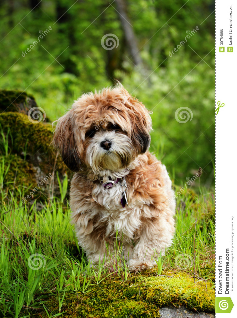 Pooch Royalty Free Stock Image - Image: 30784086