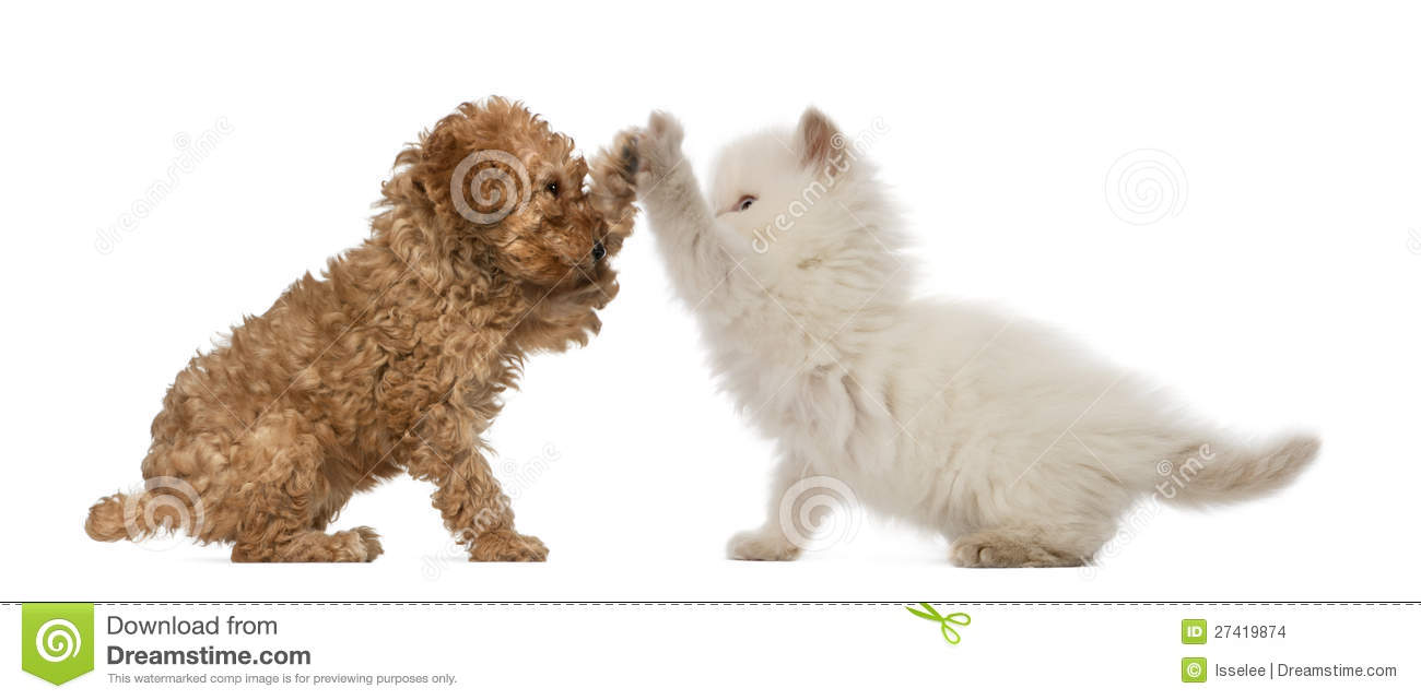 Cat And Dog High Five