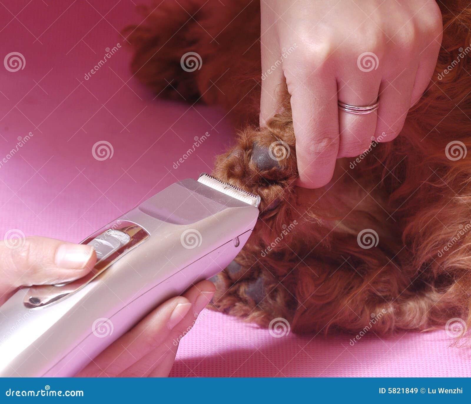 Poodlecosmetologystep