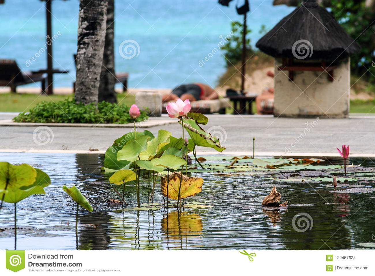 Pool with lilies and palm trees around it. Seascape of Indonesia.
