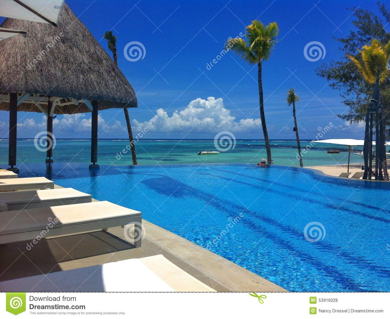 Prime Pool From Tropical Hotel Resort Stock Photo Image Of Forskolin Free Trial Chair Design Images Forskolin Free Trialorg