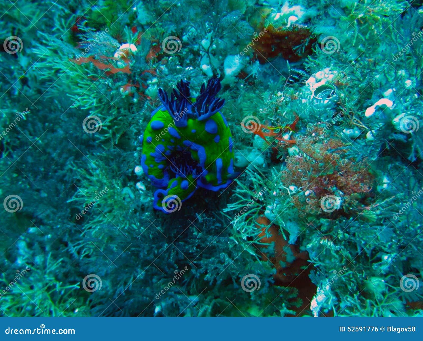 Poor Knights Islands Marine Reserve underwater