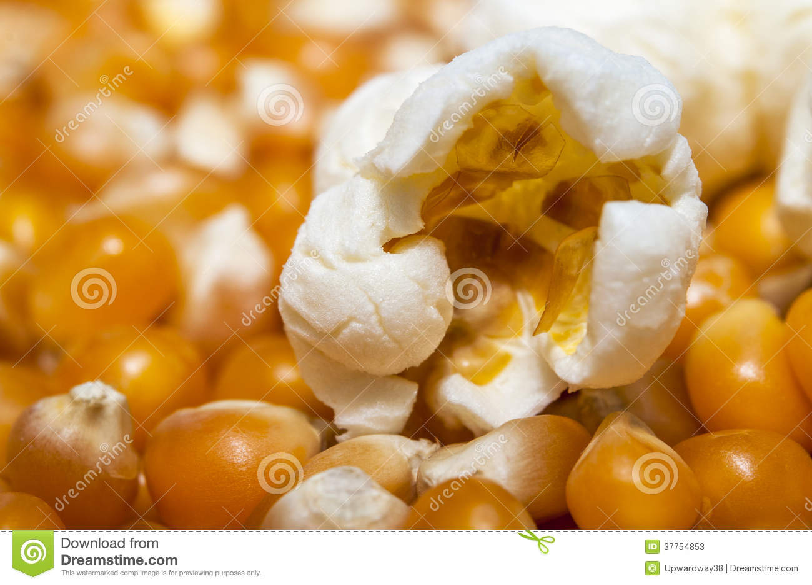 Unpopped Popcorn Kernel Clipart close- up popcorn