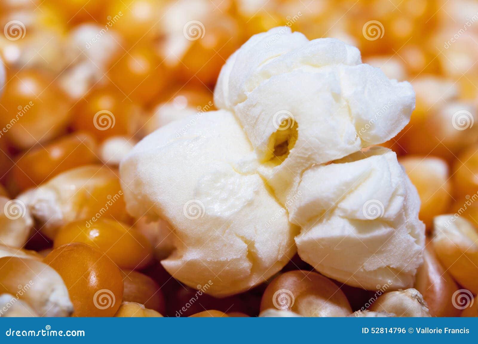 Unpopped Popcorn Kernel Clipart Popcorn popped on corn kernels