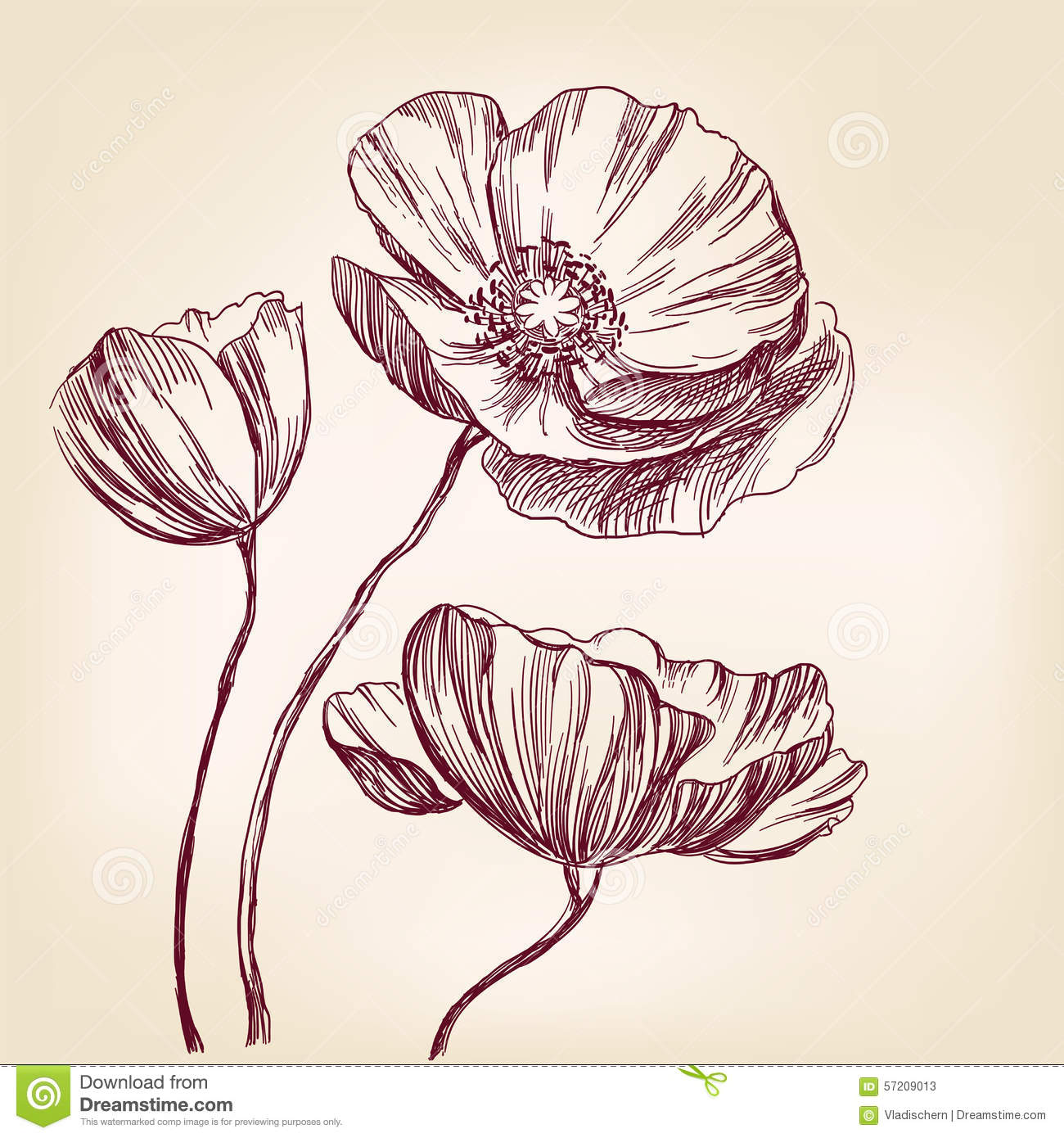 Poppies Hand Drawn Vector Llustration Ketch Stock