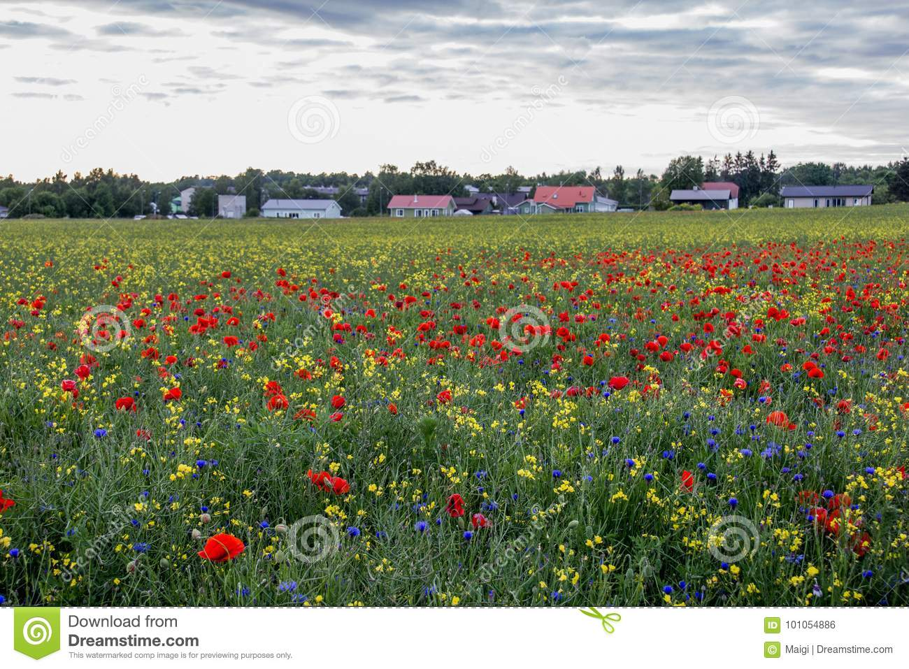 Countryside with beautiful poppy field