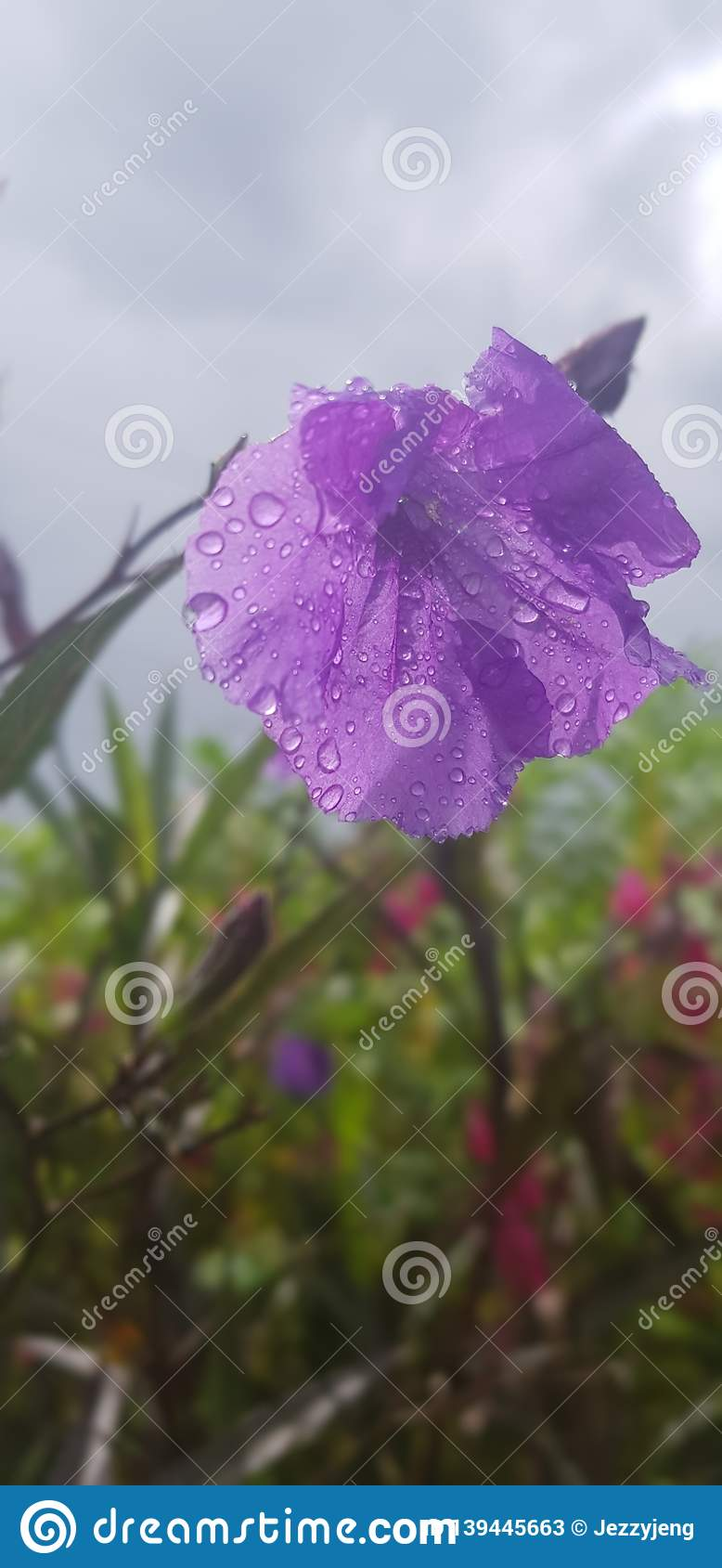 Fowler Plants Dew By Samsung Camera Stock Image - Image of