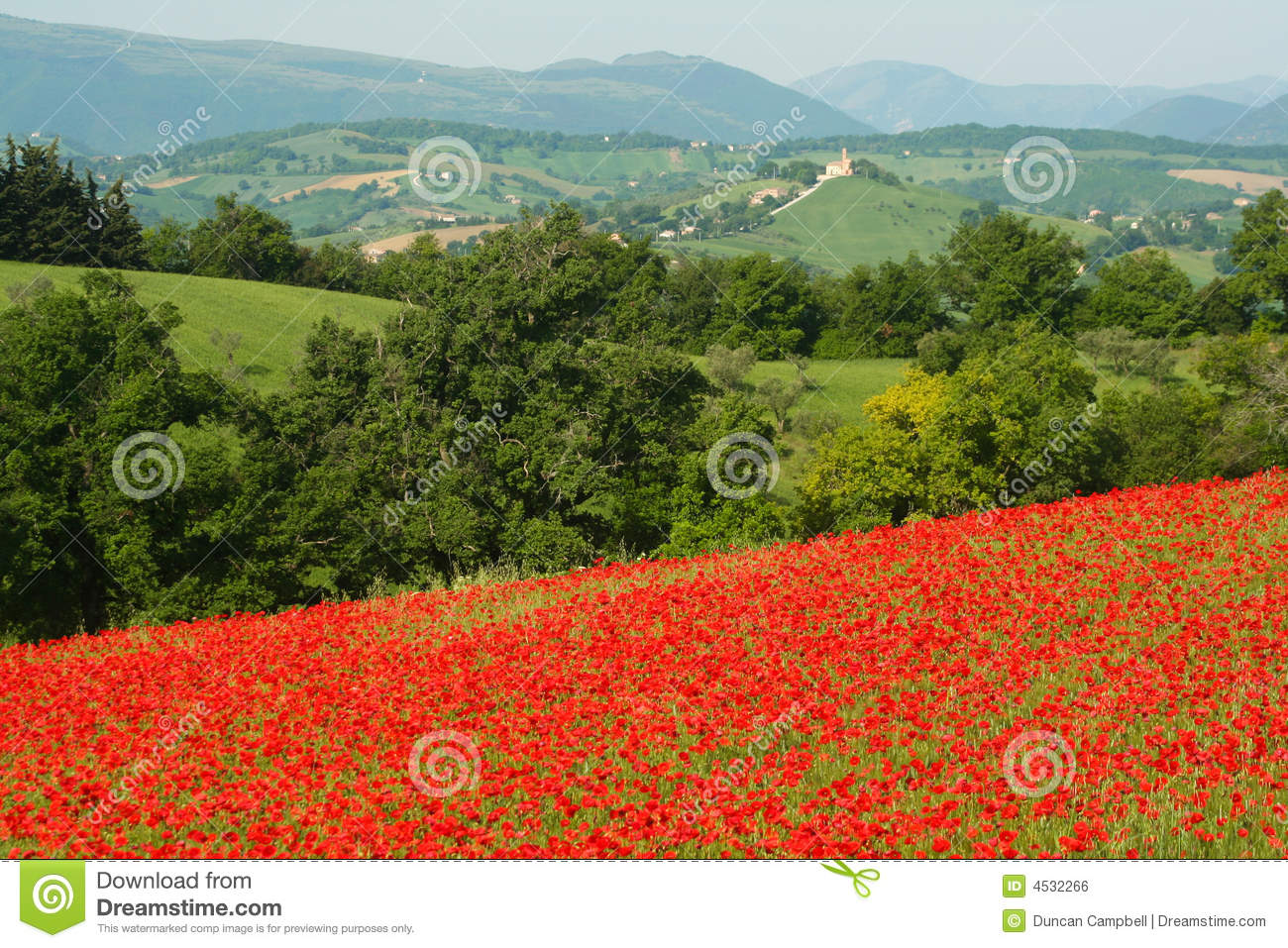 Download Poppy and church stock photo. Image of green, hill, italy - 4532266