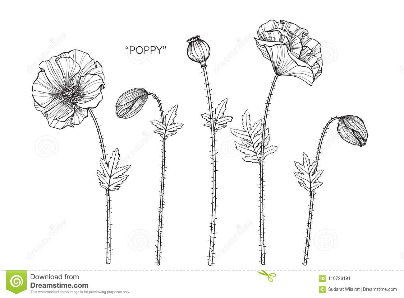Poppy flower drawing illustration black and white with line art download poppy flower drawing illustration black and white with line art stock illustration mightylinksfo