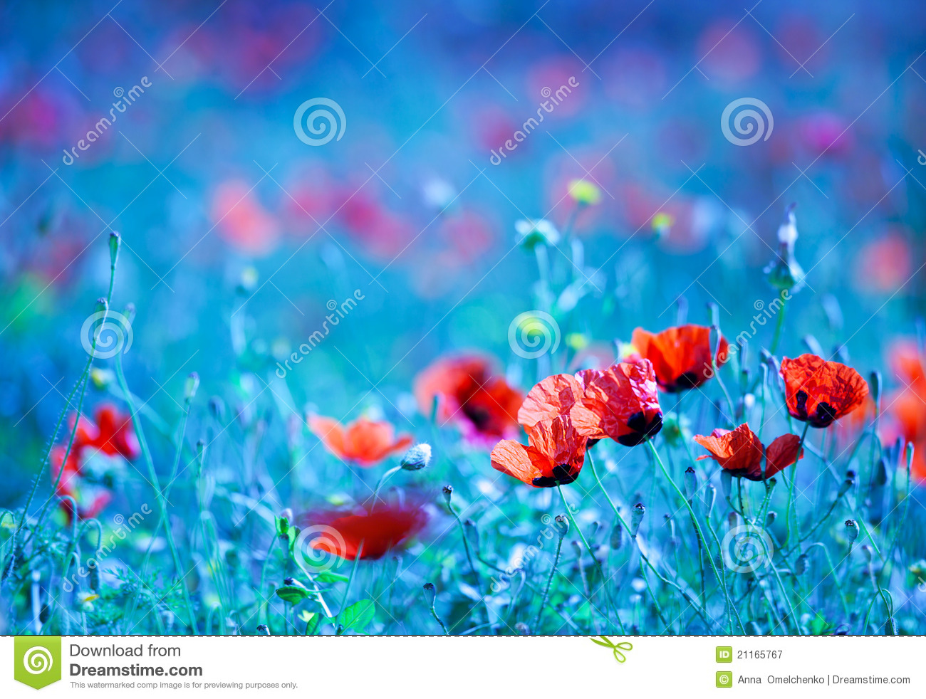 Poppy flower field at night royalty free stock photography image - Royalty Free Stock Photo Background Blue Dreamy Field Flower Focus Natural Nature Night Poppy