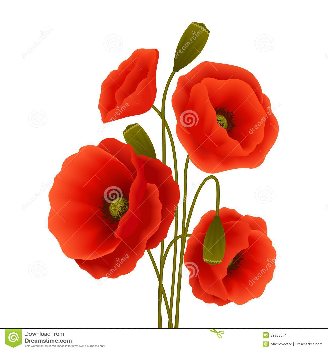 Poppy Flower Poster Stock Vector Illustration Of Decorative 39738641