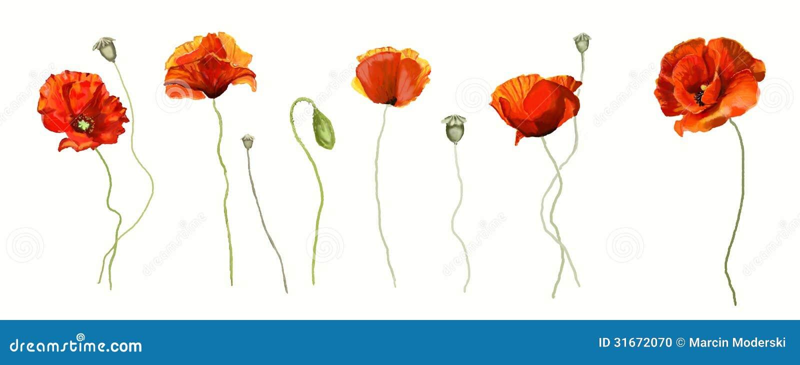 Poppy Flower Stock Illustration Illustration Of Sketch 31672070