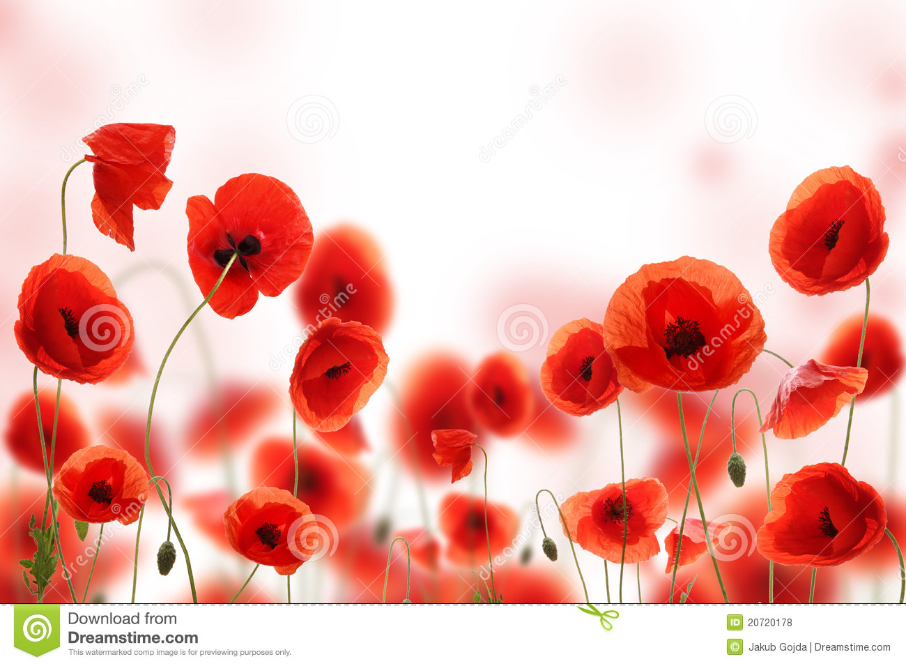 Poppy flower field at night royalty free stock photography image - Poppy Flowers Royalty Free Stock Photos