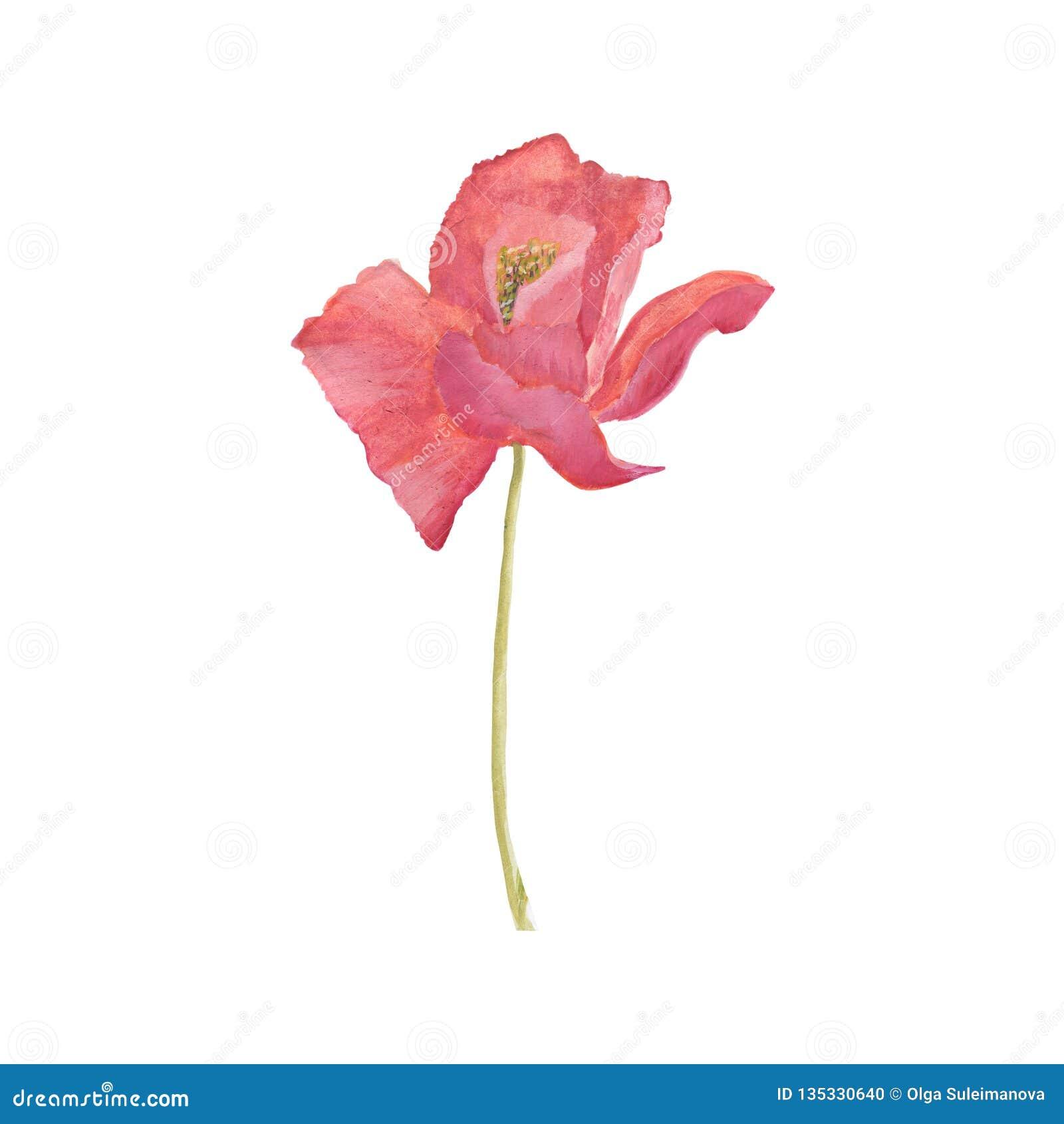 Poppy Flowers Blom- illustration för handattraktionvattenfärg