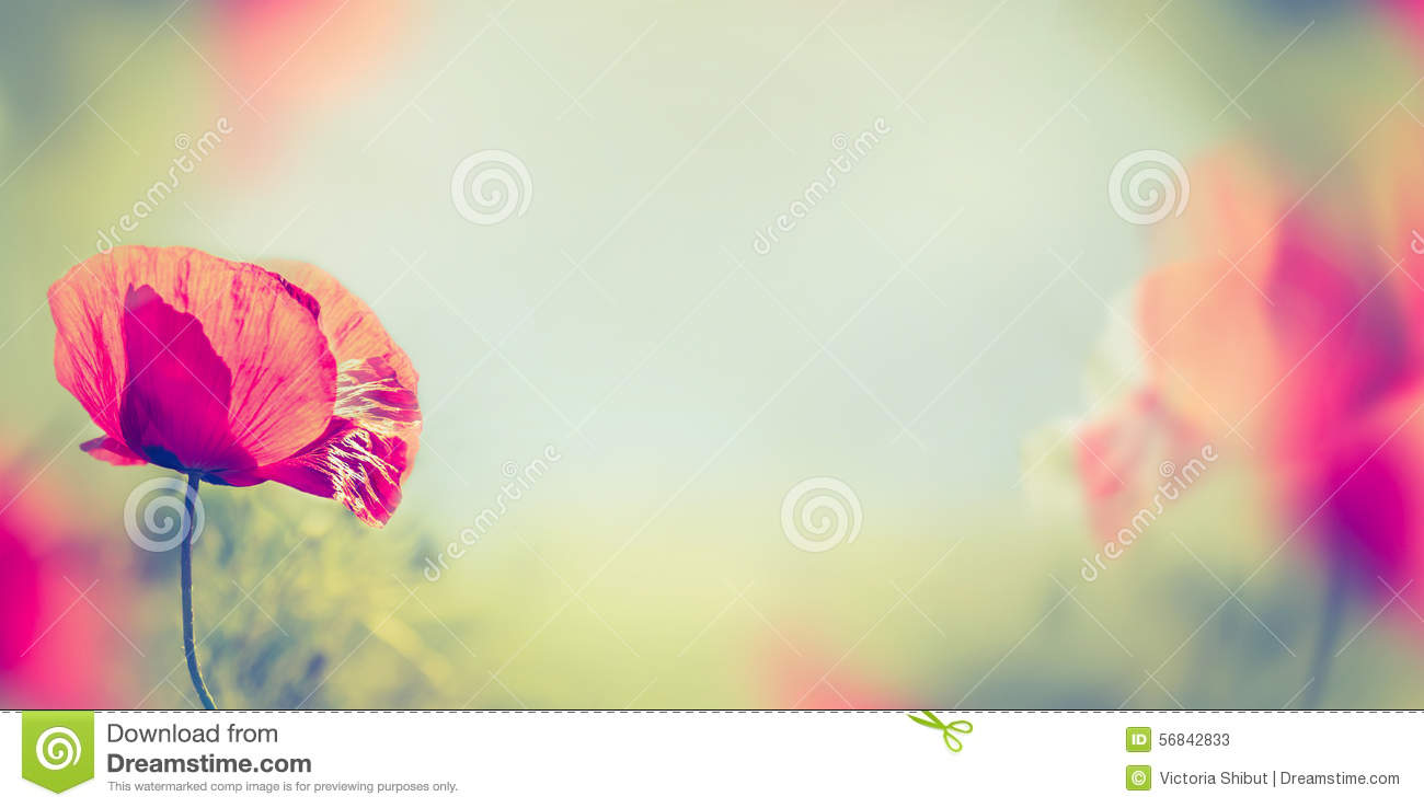Background image - Poppy Flowers On Blurred Nature Background Banner Stock Photos
