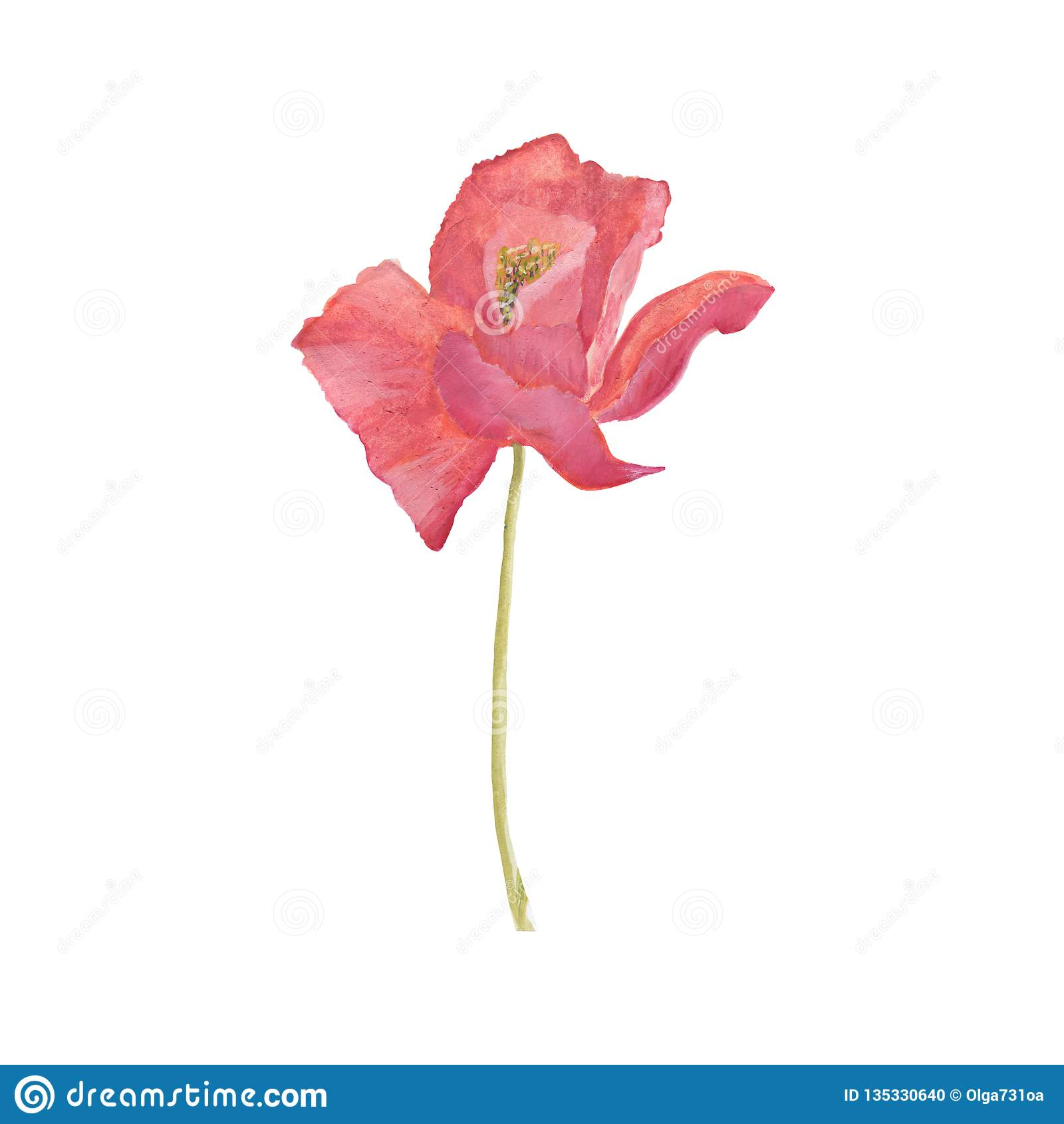 Poppy Flowers Ilustração floral da aquarela da tração da mão