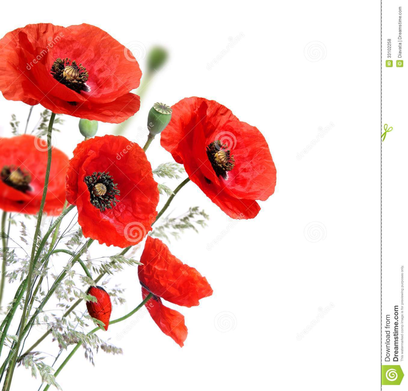 Poppy Stock Photos Download 94887 Images
