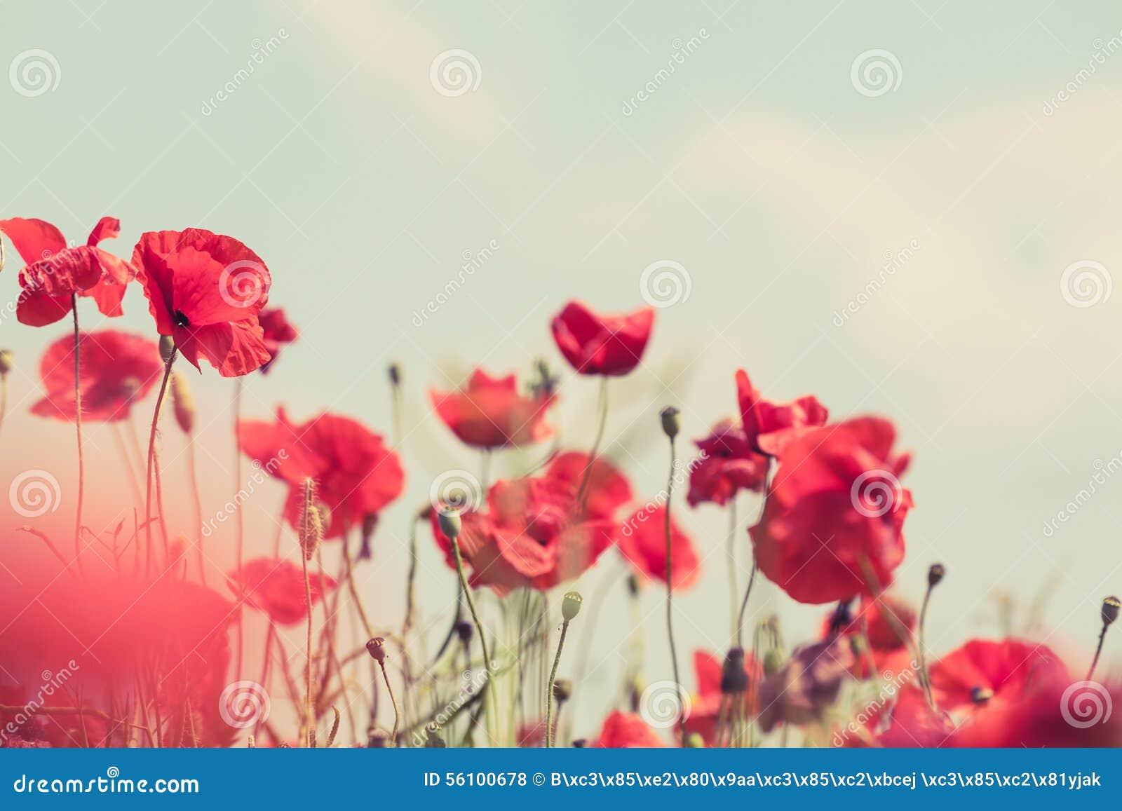 summer flower retro sunshine - photo #23