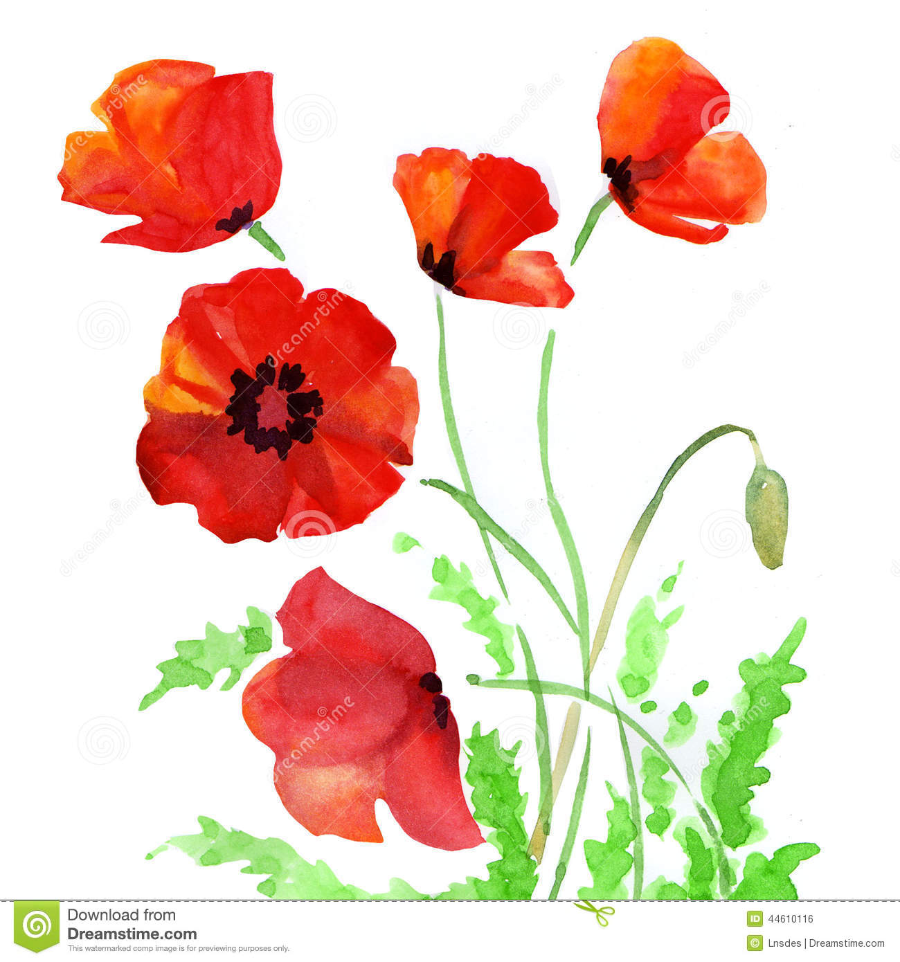 Poppy flowers watercolor illustration stock illustration download comp mightylinksfo