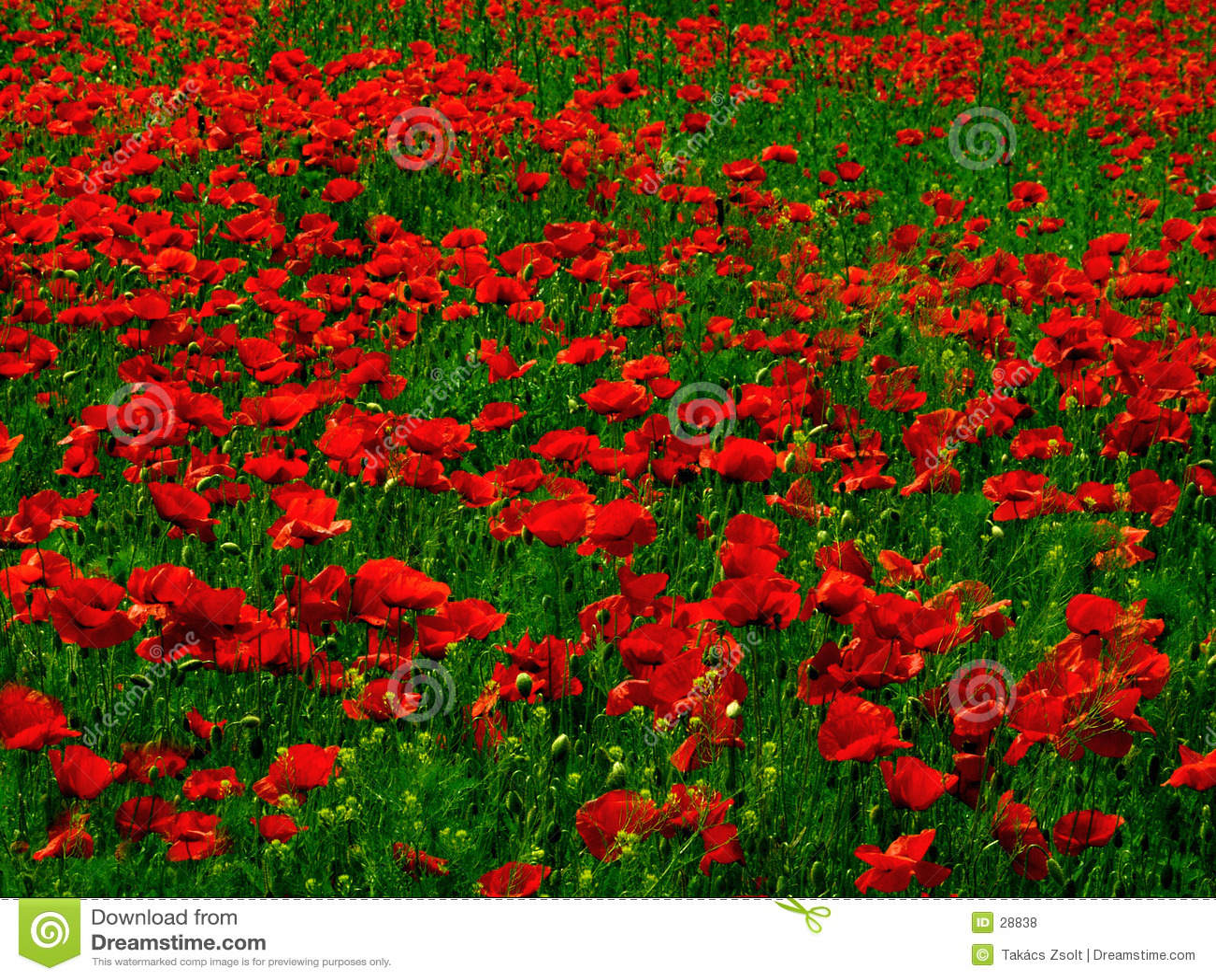 Poppy pole