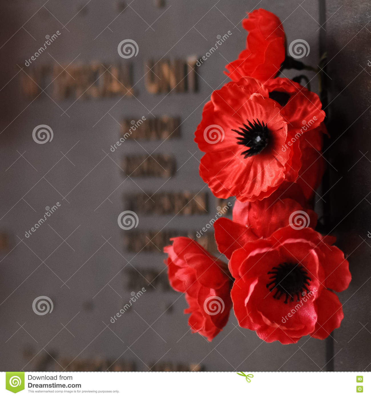 Poppy Red Flower To Tribute To The Veteran Soldier In The War Stock