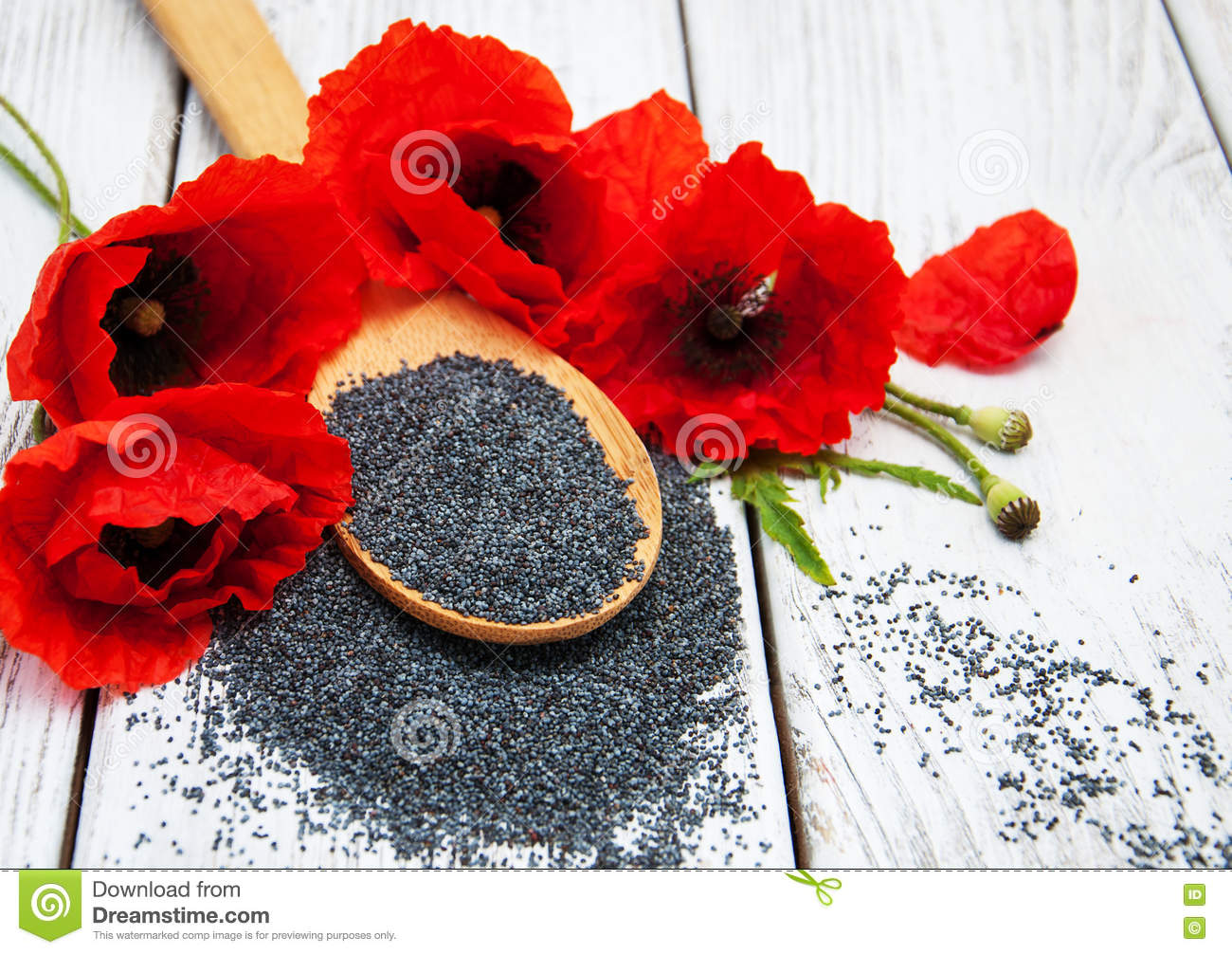 Poppy seeds and flowers stock image image of spoon plant 74230719 poppy seeds and flowers mightylinksfo