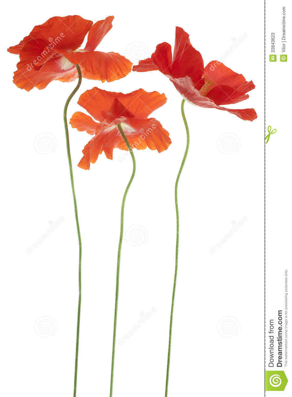 Poppy stock image image of design florescence orange 33843623 poppy buycottarizona