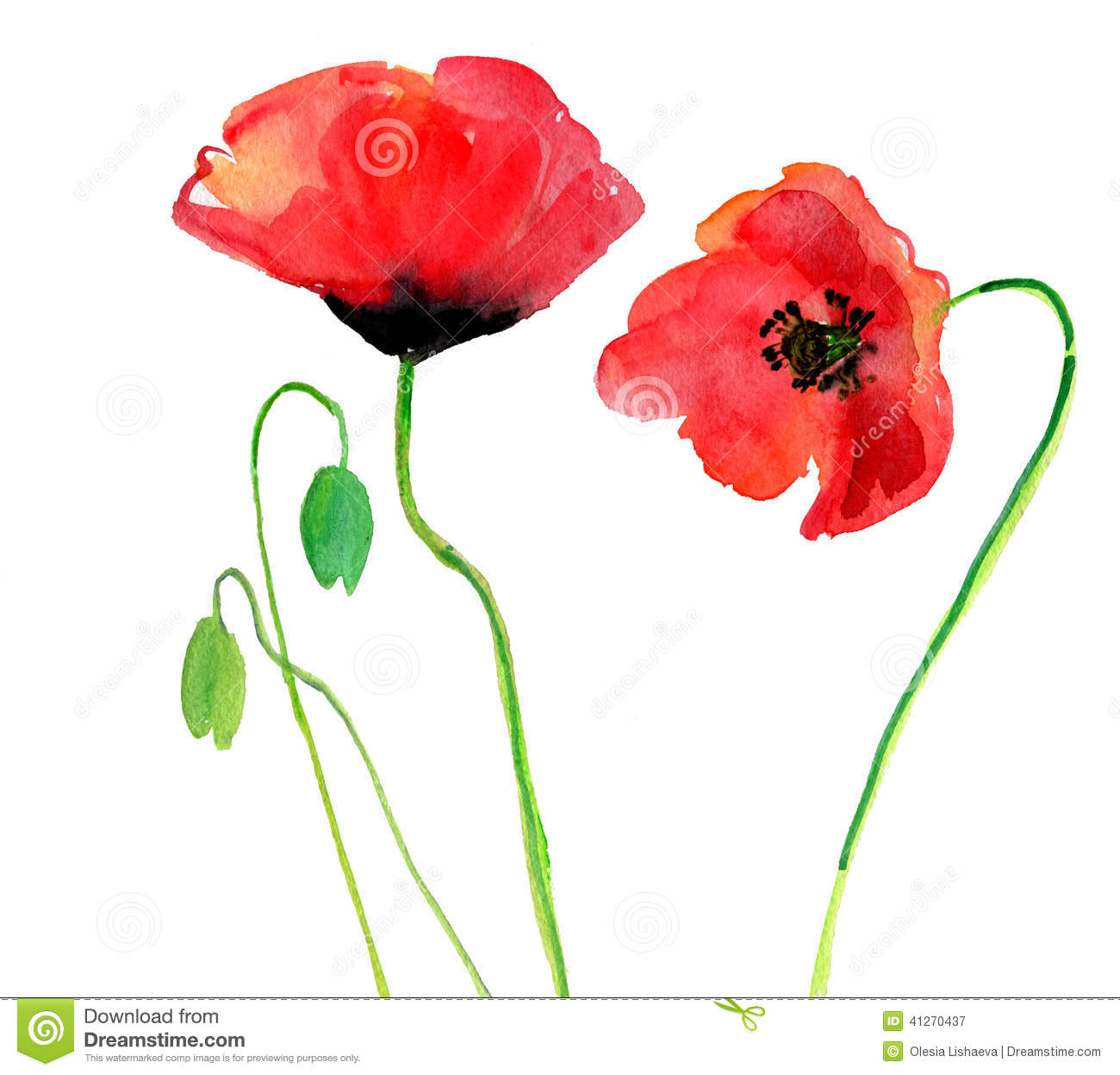 Poppy on a white background stock illustration illustration of download poppy on a white background stock illustration illustration of decorative abstract 41270437 mightylinksfo