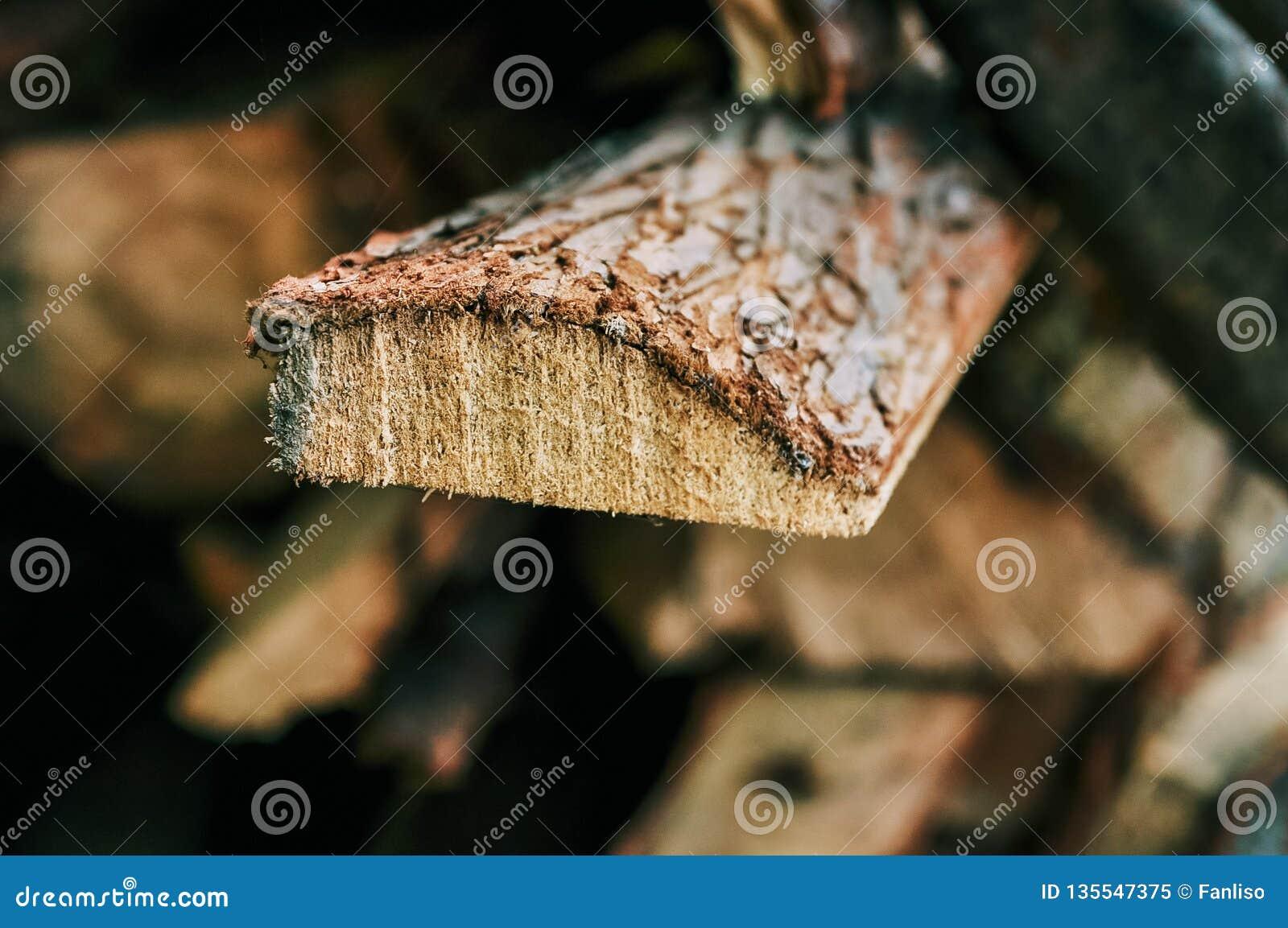 Poprzeczna sekcja drzewo altany vitae