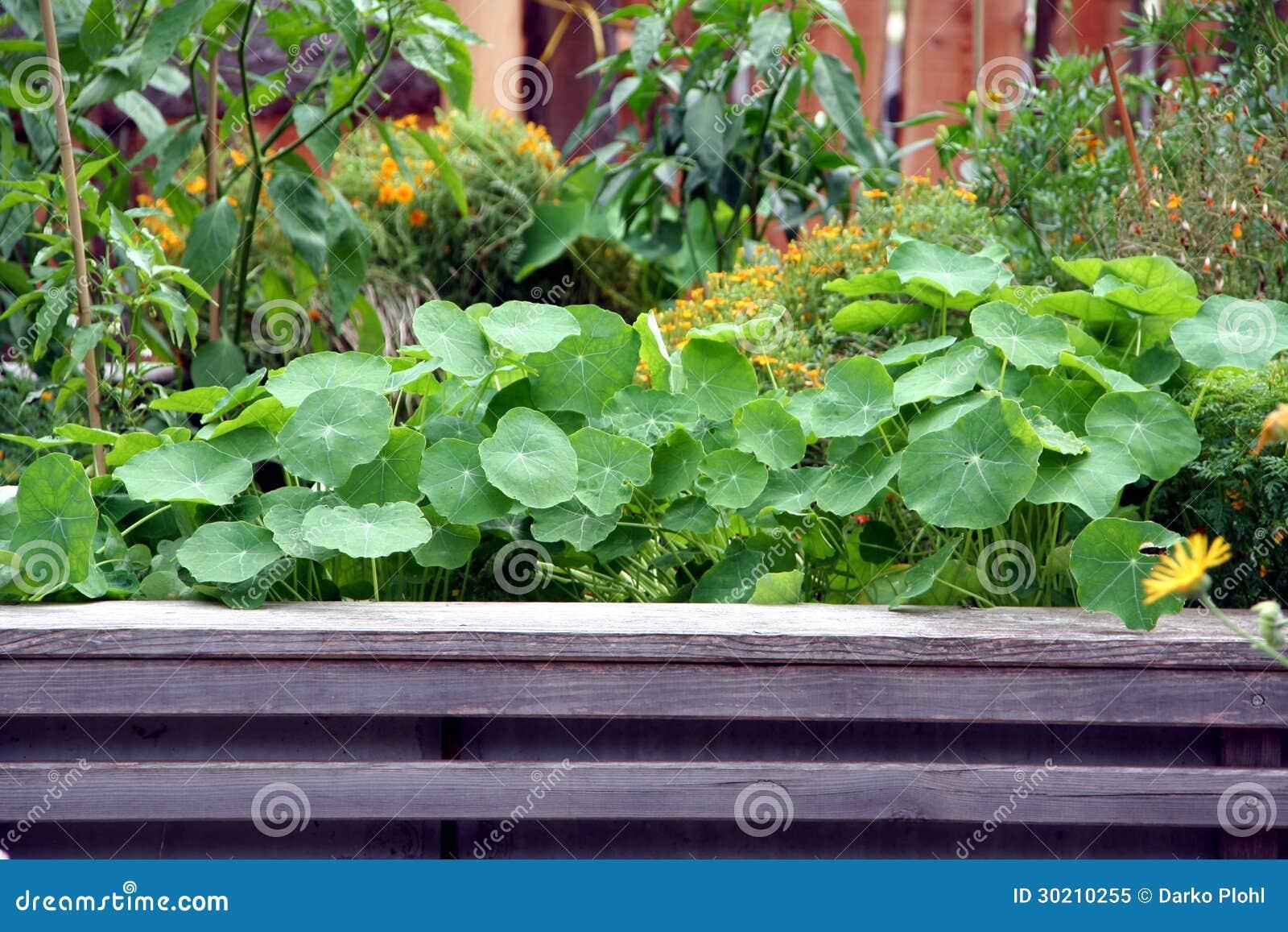 Raised Bed Vegetable Flower Garden Royalty Free Stock Image 85932730