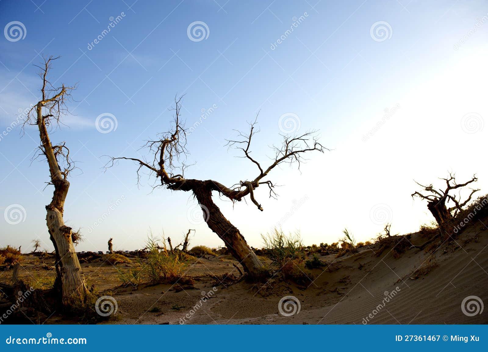 Populus tot in der Wüste.